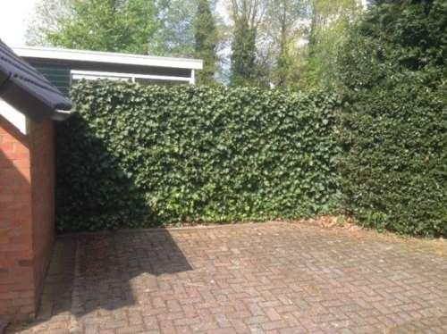 Fertighecke® Hedera Helix Woerner 120 x 180 cm